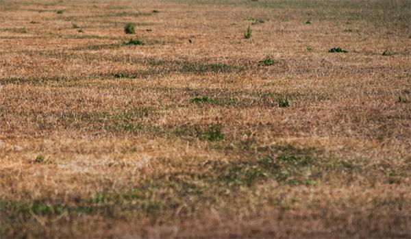 Droogte in de zomer van 2018 maakt loopgraven uit de Tweede Wereldoorlog zichtbaar in Westervoort. AVG Explosieven Opsporing Nederland maakt gebruik van foto's en filmpjes die worden gemaakt vanuit de lucht van de bodem. Het helpt bij het vooronderzoek naar conventionele explosieven.